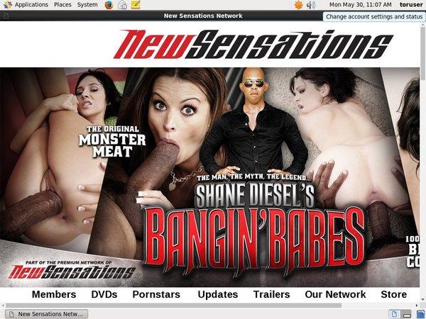Premium Shane Diesel Password