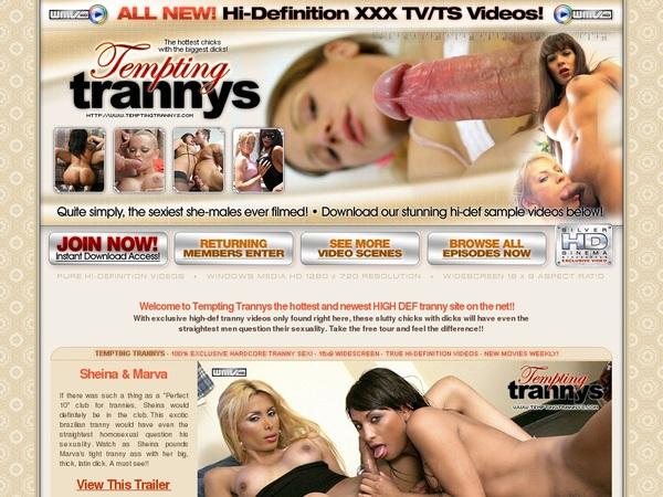 Tempting Trannys Videos